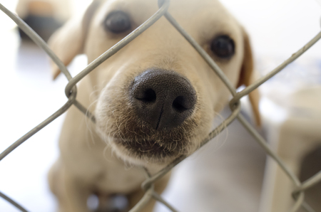 Curious dog is a dog poking his nose through a fence curiously wondering what's going on. Stockfoto