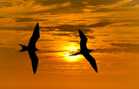 birds  silhouette: Birds silhouette is two bird flying against a vibrant bright sun orange sunset sky. Stock Photo