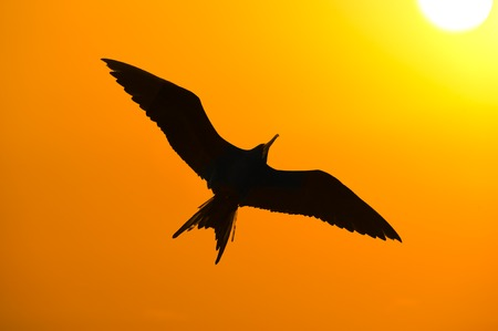 striving: Bird Silhouette is a closeup detailed silhouete of a bird flying with an orange sky and glowing sun beaming in the background