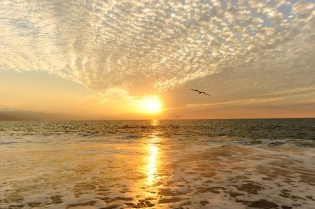 bandada pajaros: Mar puesta de sol Es aves en un tramo de la libertad y la inspiración hacia un sol brillante vibrante contra un cielo hermoso de la puesta del sol anaranjada. Foto de archivo