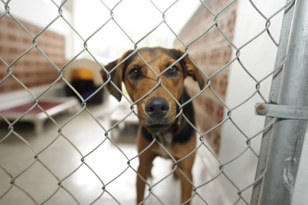 Shelter dog is is a beautiful dog in an animal shelter looking through the fence wondering if anyone is going to take him home today. Banco de Imagens