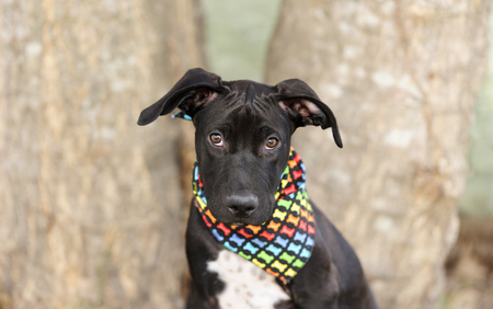 Cute dog is an adorable dog outdoors wearing a colorful bandanna looking at you curiously. Stock Photo