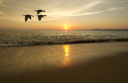 birds  silhouette: Birds silhouette flying is birds in a flight of freedom and inspiration towards a vibrant bright sun against an beautiful orange sunset sky.