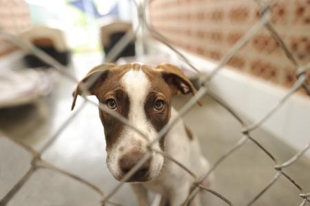 보호소 개입니다 누군가가 집에 오늘 그를 걸릴 것입니다 궁금 울타리를 통해보고 동물 보호소에서 아름 다운 개입니다.