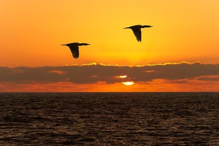 飛んでいる鳥のシルエットは 2 羽の鳥が飛んでシルエットです。 写真素材