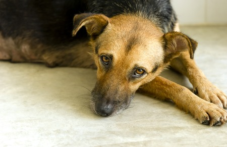 wanting: Sad dog is a sad looking abandoned shelter dog wanting someone to take him home and love her.