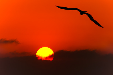 Bird isolated silhouette is single  bird flying silhouetted with a beautiful glowing sun lighting a jouney of freedom.