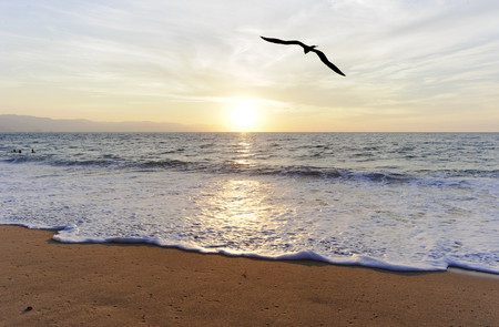 Ocean Bird Silhouette is a single silhouetted bird flying towards the setting sun. Stock Photo