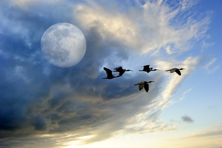Birds moon is a flock of birds flying at twilight against a colorful full moon cloudscape.