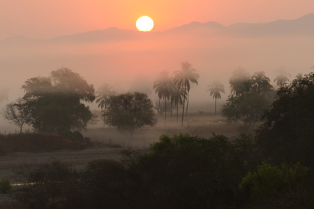 floor covering: Jungle sunrise is a misty moring covering the jungle floor as the sun rises over the mountain horizon.