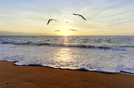 Ocean sunset birds is five silhouetted birds flying towards the light of the setting sun. Stock Photo