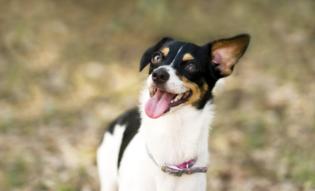 oudoors: Happy dog is a funny silly smiling puppy dog very happy to be oudoors. Stock Photo