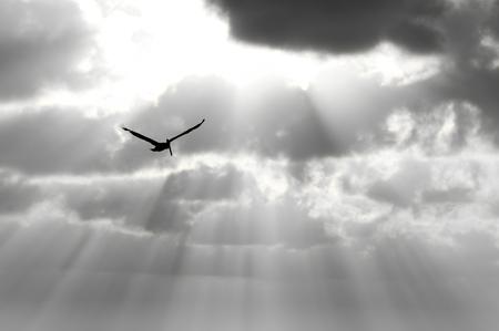鳥のシルエットは、エーテル太陽ビーム青空高騰の羽を広げている一つの心です。 写真素材