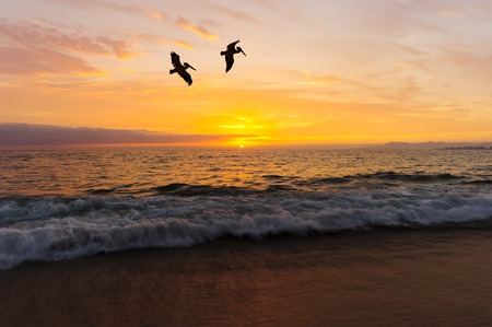 Birds silhouettes is two large seabirds flying agains a vivid and colorful ocean sunset as a gentle wave rolls to shore. Stock Photo