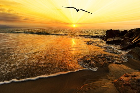 water bird: Ocean sunset bird silhouette is a single bird flying over the ocean water as sun rays burst forth from the sun in a vivid surreal colorful scenic seascape.