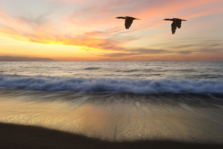 Birds silhouettes is two beautiful birds flying as one at sunset as an ocean wave rolls to shore Stockfoto