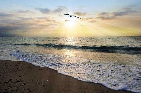 鳥シルエット太陽光は、光に向かって移動する単一の鳥と海の波が海岸に来る優しく夕日からみなぎる太陽ビームと風光明媚な空気のような海です 写真素材
