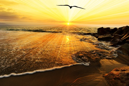 water bird: Bird silhouette ocean sunset is a single bird flying over the ocean water as sun beams burst forth from the sun in a vivid surreal colorful scenic seascape.