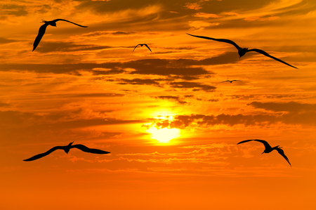 Sunset birds flying is flock of birds flying into the colorful surreal sunset with a white hot glowing sun guiding the way. Stock Photo