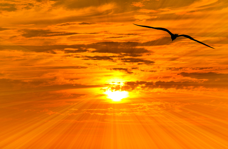 Bird freedom silhouette flying is a silhouetted bird flying against a vibrant orange golden sunset sky with a sun ray burst emanating outward..