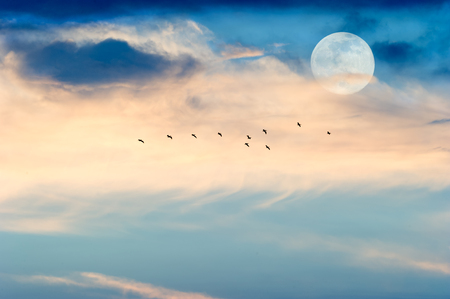 wispy: Moon birds is a silhouetted flock of birds flying by the light of the moon among the wispy clouds..