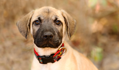 Puppy dog adopt is a cute adorable puppy outdoors in nature wondering if someone is going to take him home today..