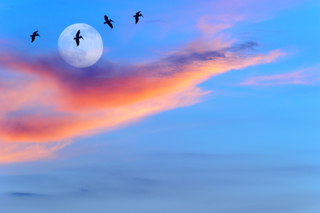 Moon birds silhouettes is four large birds flying by the light of the moon.