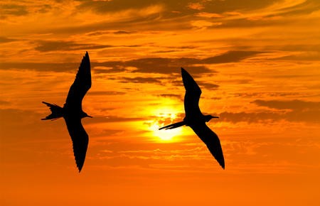 Bird silhouette flying is a silhouette of a bird with wings spread in a peaceful flight of freedom.