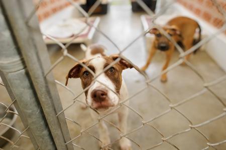 El refugio para perros es un refugio de animales con un lindo y triste perro buscando que alguien se lo lleve a casa hoy. Foto de archivo