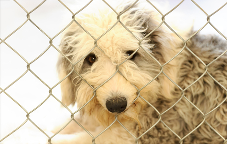 Animal shelter is an animal dog  shelter with a sad cute dog looking up wanting someone to take him home today.
