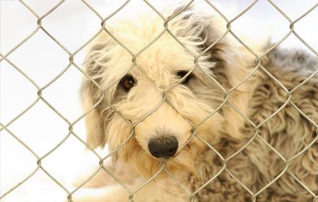Refugio de animales es un refugio para perros con un lindo y triste perro buscando que alguien se lo lleve a casa hoy.