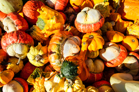 Squash is a variety of colorful squash in in a collage of color.