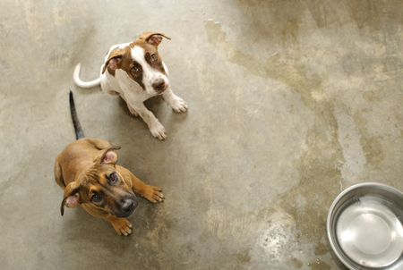Shelter animals are two puppy dogs waiting for someone to rescue adopt them and take them home.