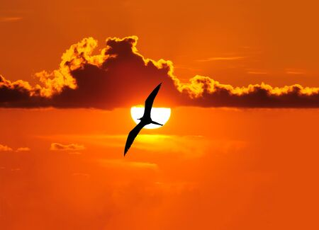 A Silhouette of a Bird is Soaring Across the Sunset Sky as The Sun Rises in the Beautiful Peaceful Cloudscape Scenic Фото со стока