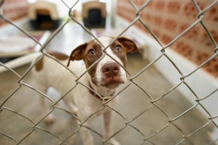 A Rescue Dog at an Animal Shelter is Looking Through the Fence