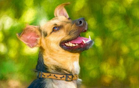 A German Sheppard Dog Is Outdoors Happy with Excitement Imagens