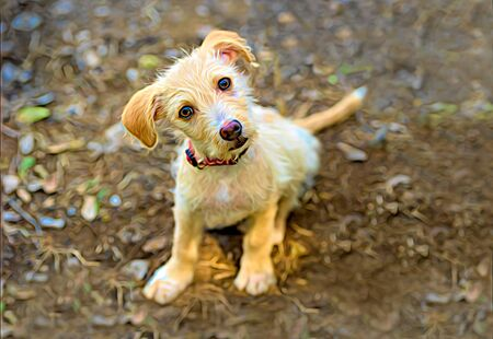 Curious Dog is a Cute Puppy Looking Up With A Funny Look on Its Face Stockfoto