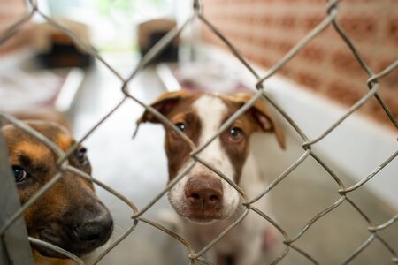 Two Rescue Dogs in an Animal Shelter are Looking Through the Fence