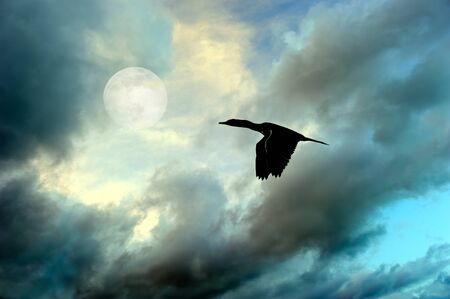A Silhouette Bird Flying By a Rising Moon in a Dramatic Moody Sky
