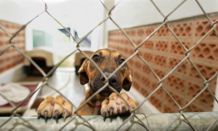 A Rescue Dog at an Animal Shelter is Looking Sad Through a Fence Stockfoto