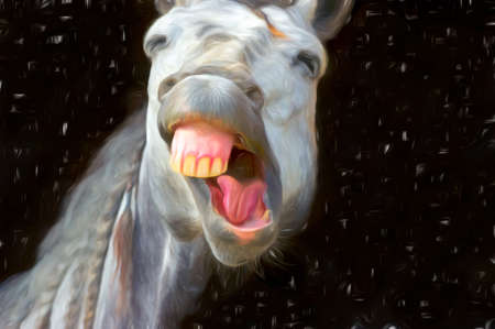 A Funny Silly Looking Horse is Laughing Out loud Stockfoto