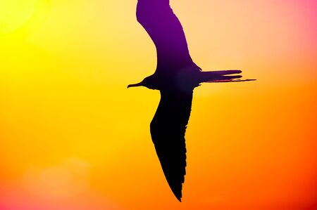 A Single Bird Flying in a Multicolored Sky