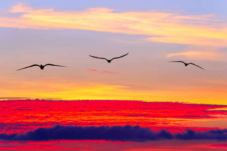 Three Birds Are Flying Over a Colorful Surreal Sunset Sky