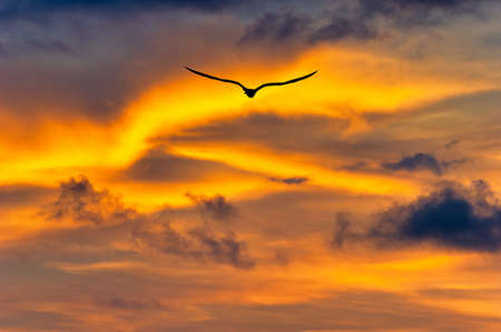 A Single Bird Flies Into the Colorful Vibrant Sunset Clouds