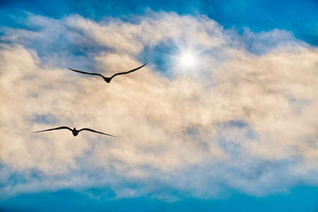 Two Birds Flying Above the Clouds Towards a Brightly Lit Star