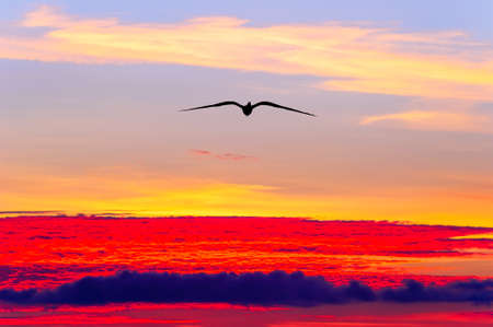 A Single Bird Silhouette Flying High Above the Clouds
