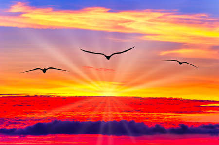 Three Birds Fly Above the Sunset As Sun Rays Emanate From Behind the Clouds