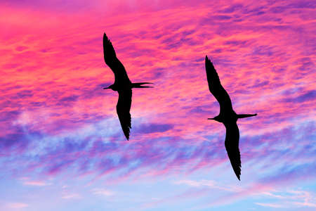 Two Birds Are Flying Together With Wings Spread Silhouetted Against A Vivid Colorful Sunset Sky Banque d'images
