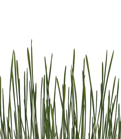 Early green grass isolated on white background Stock Photo - 8416683