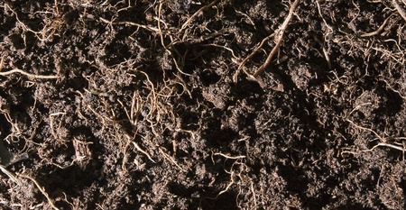 The close up of fertile soil -earth with backs